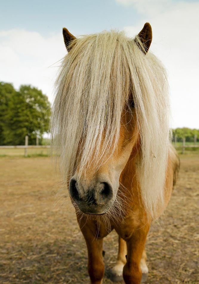 Landpark Lauenbrück Falabella Ponys